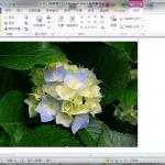 Office 2010 令人驚豔的去背功能